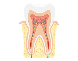 Animation of the inside of a tooth